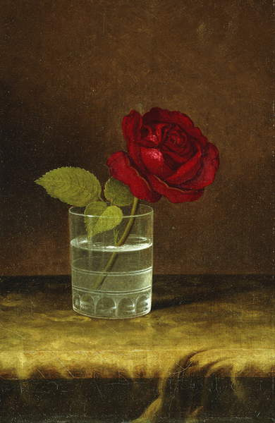 Rote Rose, von Martin Johnson Heade